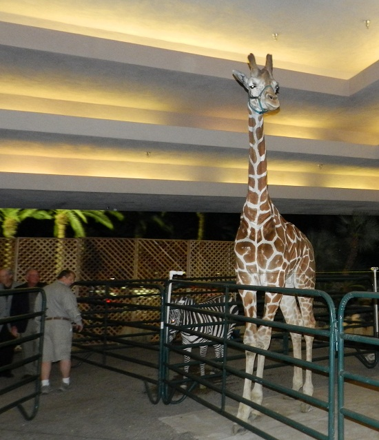 Giraffe for rent for parties, event, video and photo shoots and film production in California and Florida