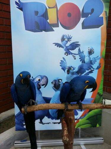 Rio blue Parrots for Rio themed Party