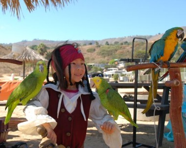 Jack sparrow impersonator and pirate entertainer with parrot for children's party or special event or pirate party