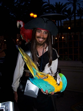 Pirate entertainer with parrots